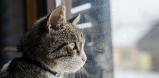 os gatos nos ensinam que o amor de verdade sempre volta pra casa 324x160 -