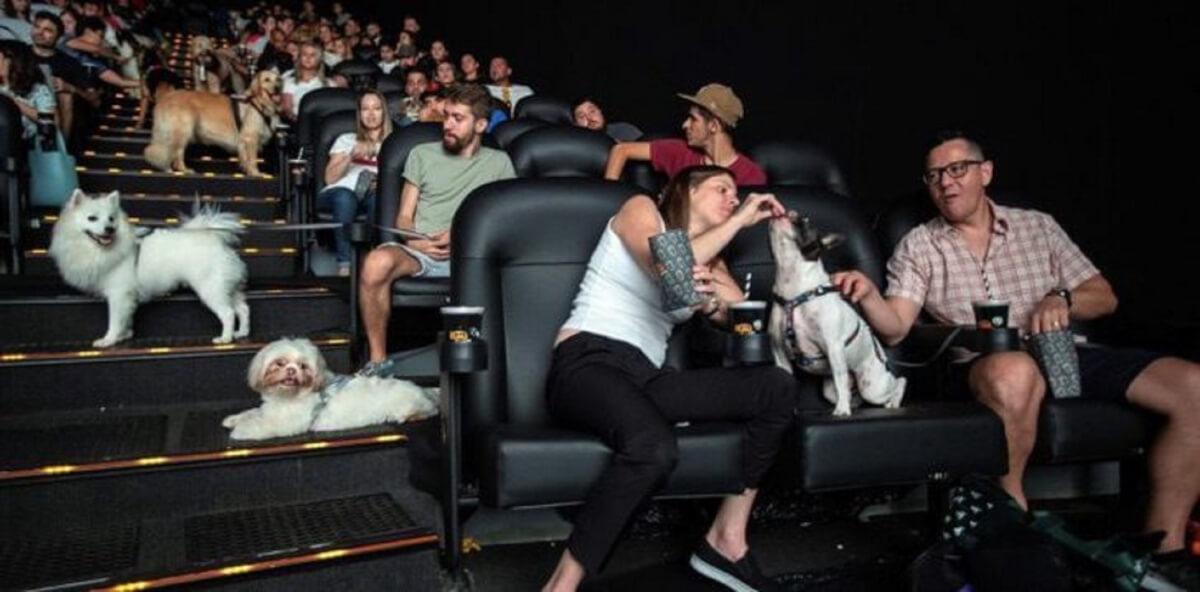 """1 186 - Cachorros assistem ao filme """"A caminho de casa"""" com seus tutores em cinema de São Paulo"""