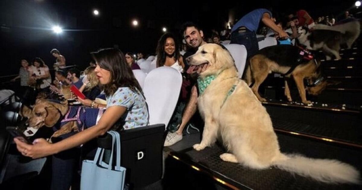 """2 176 - Cachorros assistem ao filme """"A caminho de casa"""" com seus tutores em cinema de São Paulo"""