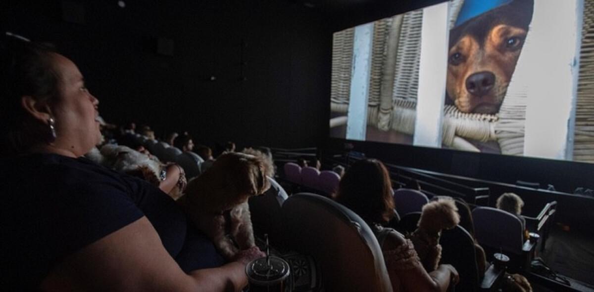 """4 84 - Cachorros assistem ao filme """"A caminho de casa"""" com seus tutores em cinema de São Paulo"""