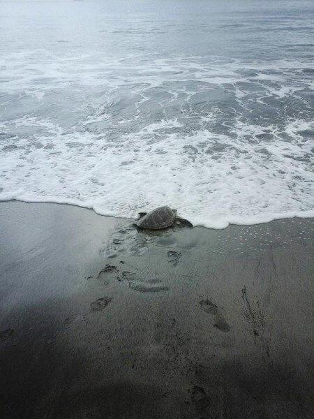 homem compra tartaruga 04 450x600 - Dois amigos compraram tartarugas em mercado de carnes para devolvê-las ao mar