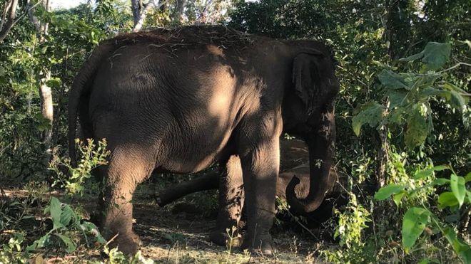 maiaeguida - Elefanta se despede de companheira, após uma vida juntas