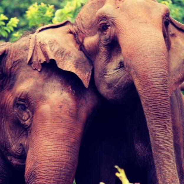 maiaeguida2 - Elefanta se despede de companheira, após uma vida juntas