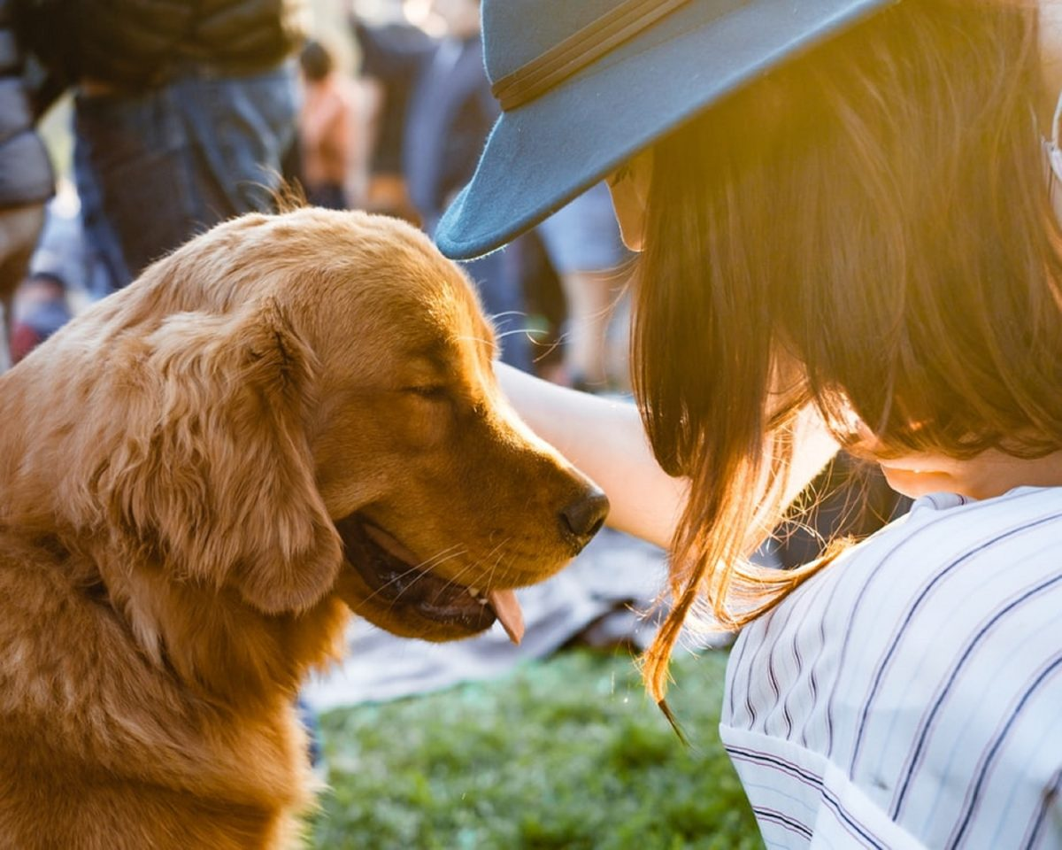 photo 1507682520764 93440a60e9b5 scaled - Lutar pelos animais não significa menosprezar as pessoas